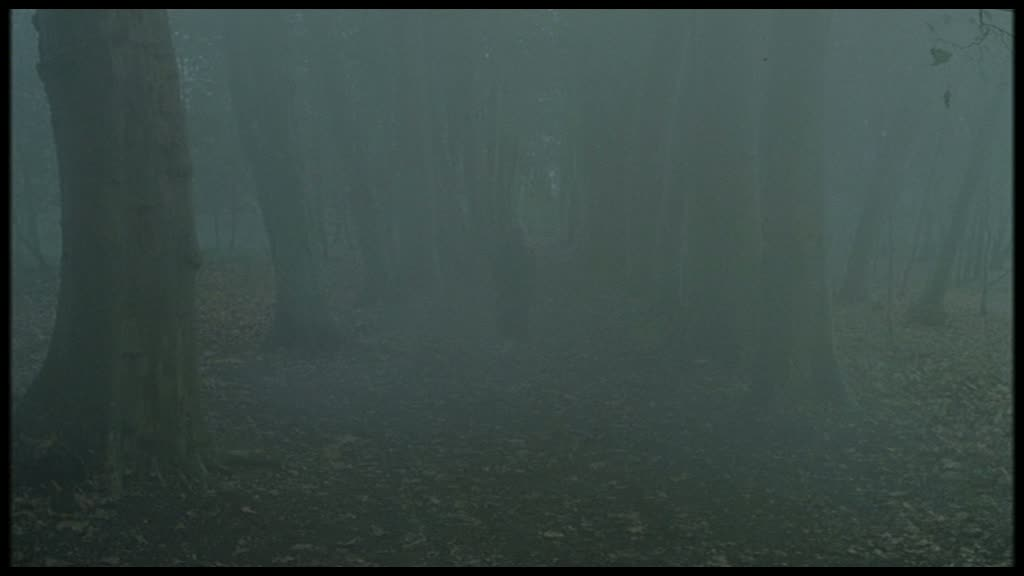 A very foggy image showing Nicole Kidaman walking through the Lime Walk at Penshurst Place. You can see her silhouette in the fog between the two rows of trees and the autumn leaves on the ground.
