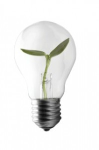 Light Bulb with shoot growing within it © Buss-Root
